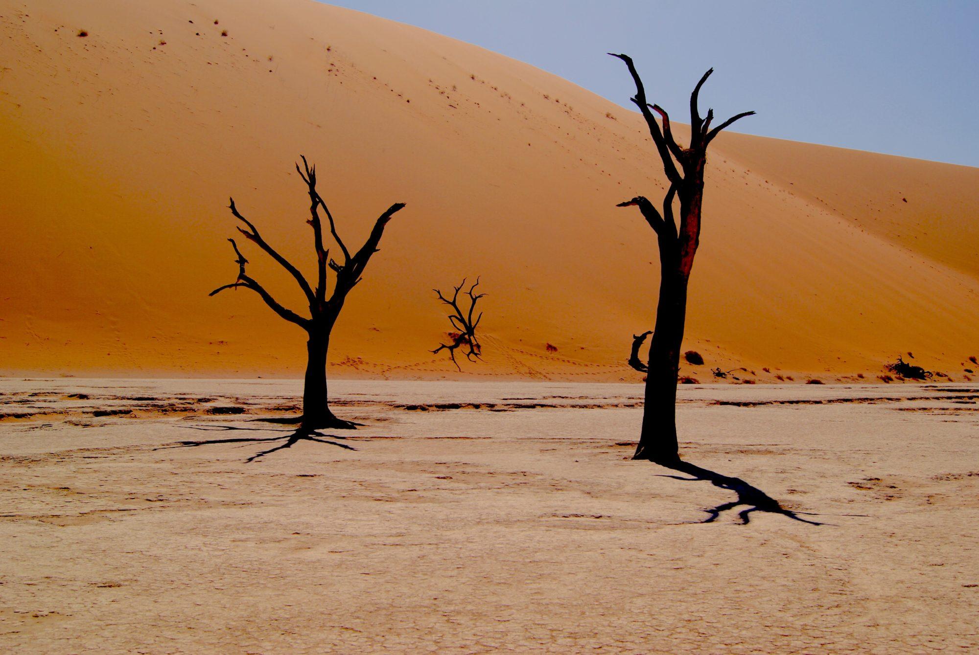 Dry Thirsty Land